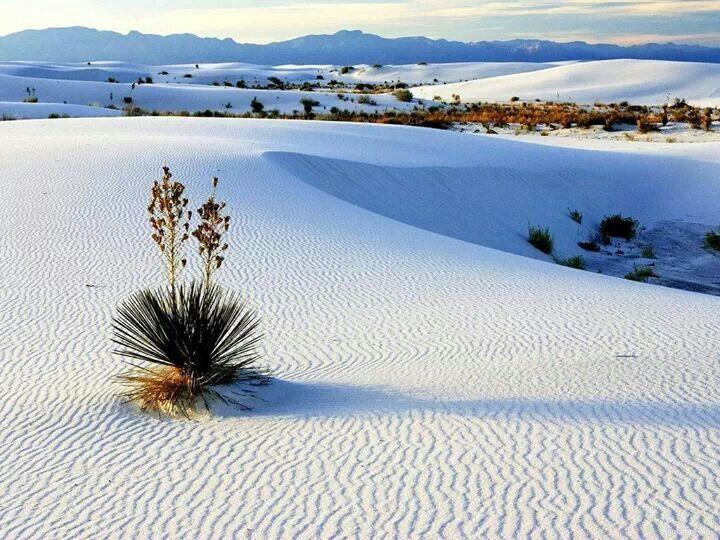 desert de coahuila - Recherche Google