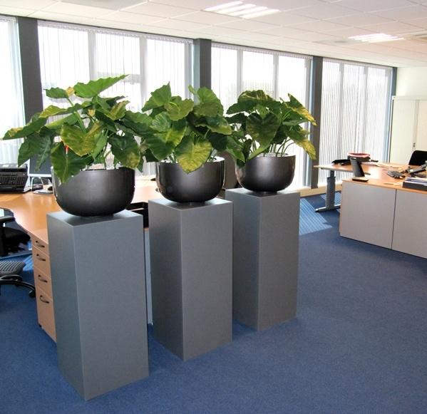 Grootbladerige alocasia kunstplanten in luxe polystone - Photo deco kantoor ...