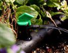 "Drip Irrigation Supplies / Soaker Hose Dripline / 1/4"" Soaker Hose Dripline category Products"