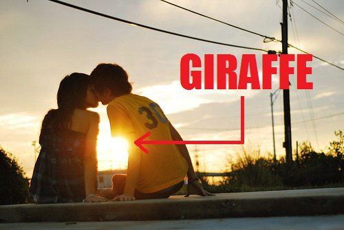 Where there's love, there's giraffes: Picture, Random, Funny Stuff, Funnies, Humor, Photo, Giraffes