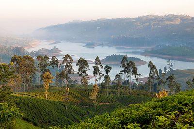 Après des années noires de guerre civile, le Sri Lanka se rouvre au monde et n'en finit pas d'aimanter les globe-trotteurs experts. Pas étonnant, quand on sait que ce pays de l'océan indien fourmille de plages de surfeurs, de sublimes par nationaux à la faune et à la flore colorés, de temple hindous plantation de thé… Autant de raisons de sillonner ce pays aux paysages à couper le souffle à la découverte des meilleures adresses par région. Suivez le guide.