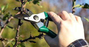 pruning schedule Archives - GardenTipz.com