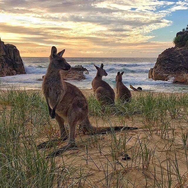 "52.4k Likes, 179 Comments - Australia (@australia) on Instagram: """