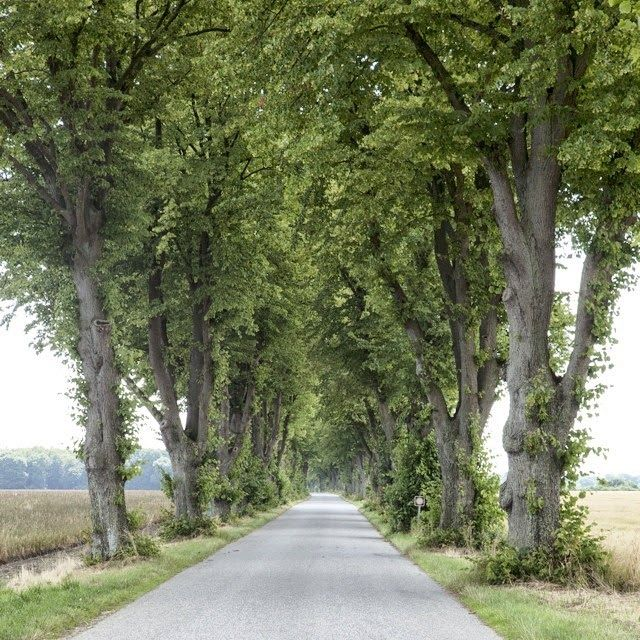 Siempre me gustaron estos caminos