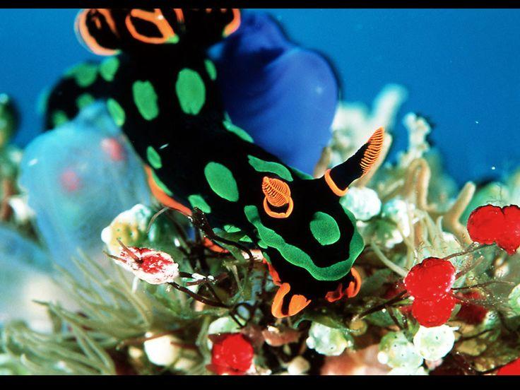 Красочные рыбы - картинки для мобильного: http://wallpapic.ru/ocean-and-sea/colourful-fish/wallpaper-11134