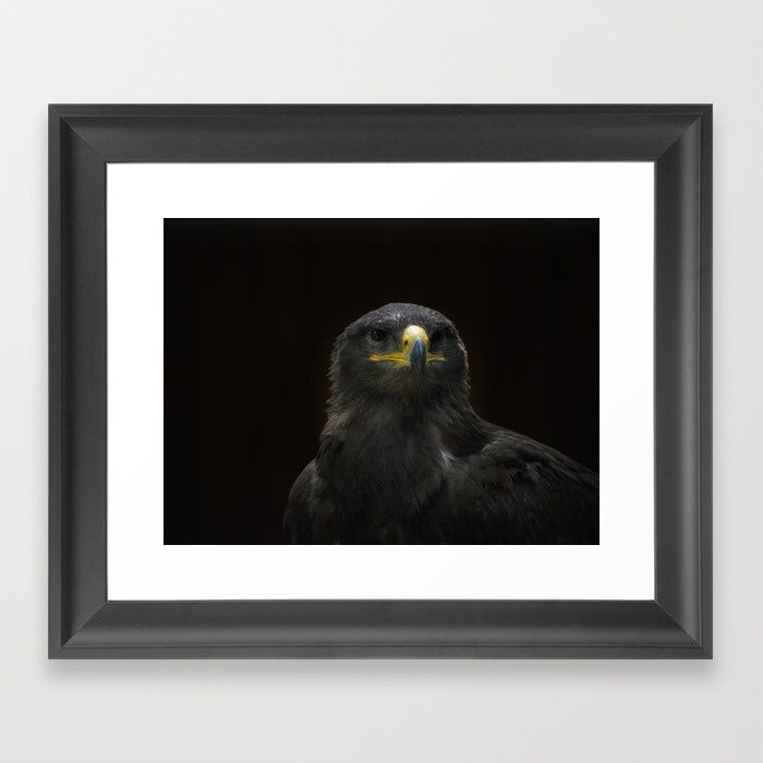 Steppe Eagle Framed Art Print by Mixed Imagery | Society6