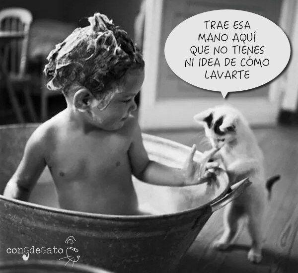 gato-ducha