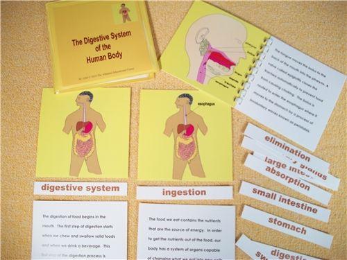 Le carte Montessori per bambini dopo i sei anni hanno caratteristiche e funzioni diverse da quelle usate nella scuola d'infanzia. Le carte delle nomenclature Montessori in tre parti, per i bambini dai 3 ai 6 anni, sono costituite da: Una…