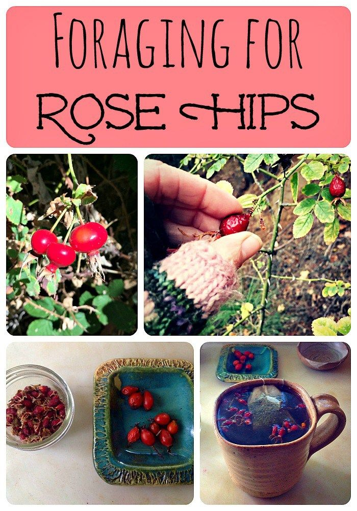 1000+ images about Homesteading/Foraging on Pinterest | Elderberry ...