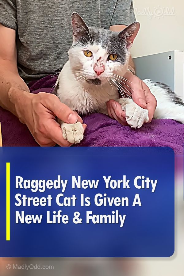 Raggedy New York City Street Cat Is Given A New Life Family In 2020 Cats Animal Rescue Stories Shelter Dogs