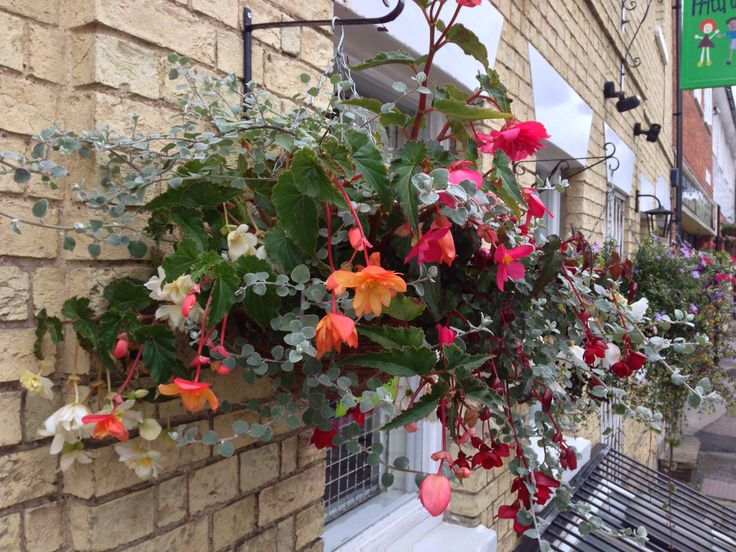 Hanging baskets in Saffron Walden town centre. Summer 2013 www.billflowers.co.uk