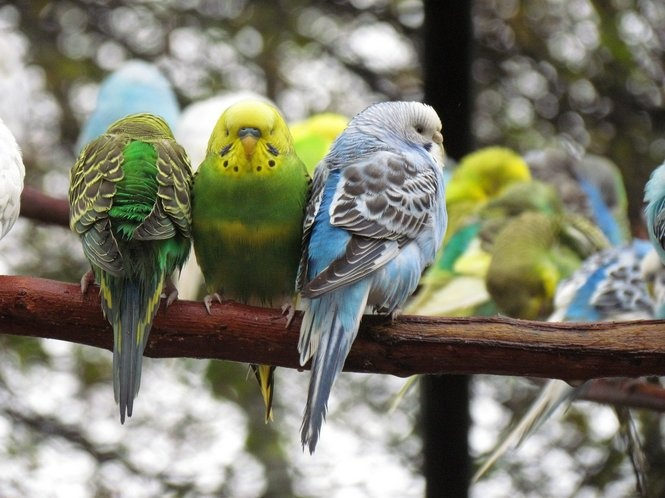 visit Parakeet Cove at the Montgomery Zoo
