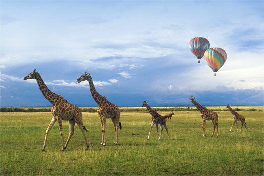 Hot air balloons and giraffes.  Kenya Wildlife Safari - African Safaris by Friendly Planet Travel