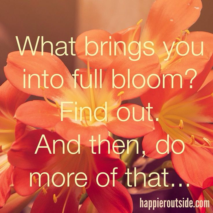 What brings you into full bloom? Find out. And then, do more of that... #happieroutside