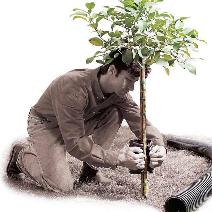 Tree Trunk Protector Protect the trunks of young trees and bushes from lawn trimmers and critters by using 6-in. flexible plastic drainage pipe. Cut a short piece of pipe, split it along its length, and wrap it around the young tree.