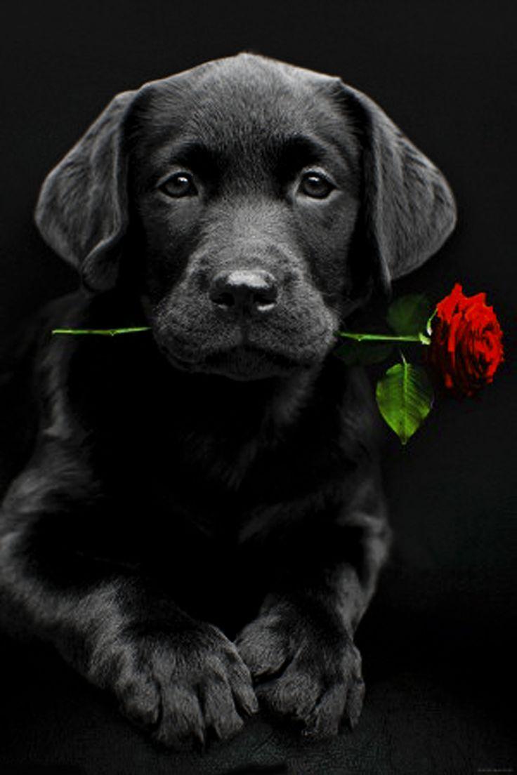 Most Intelligent Dog - Least Intelligent Dog