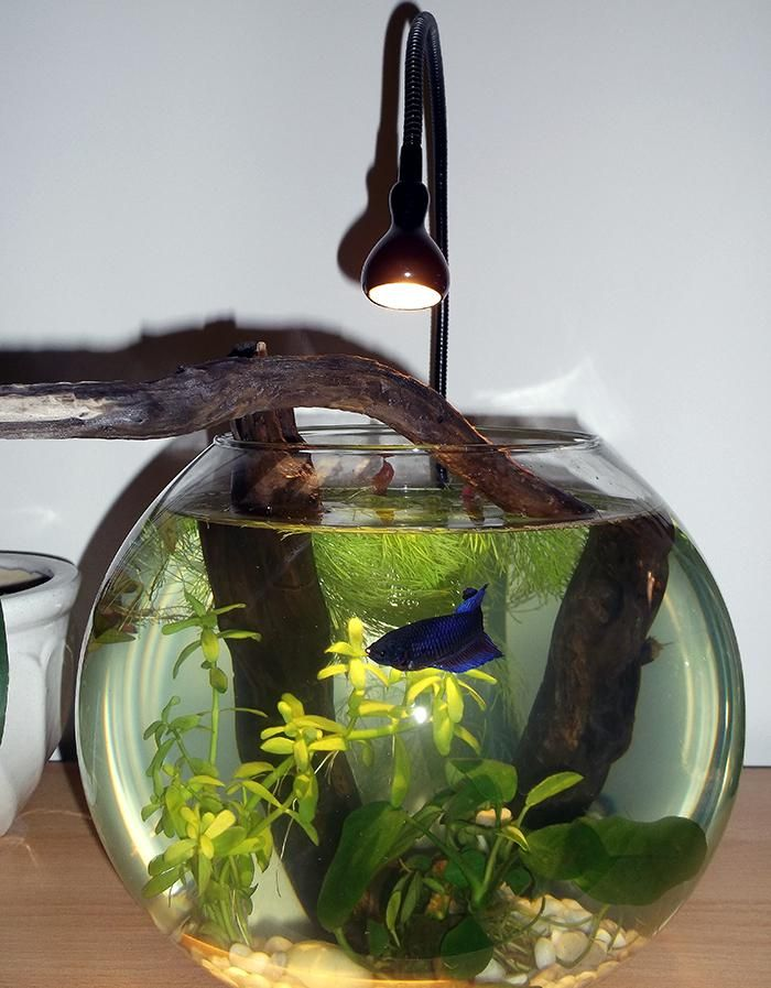102 best images about aquariums on pinterest planted for Good betta fish names