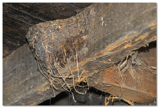 Vogelbescherming Vlaanderen dient een verzoekschrift in bij de Rechtbank van Eerste Aanleg te Turnhout om te voorkomen dat er in de stallen van een rundveebedrijf te Mol met insecticiden gespoten wordt. Deze stallen huisvestigen maar liefst een kolonie van bij de zestig Boerenzwaluwen.