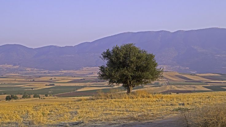 The Olive Tree by Eleftherios V on 500px