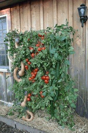 Vegetable Garden Hacks Small Spaces