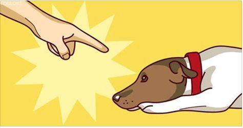 Mais uma matéria para quem ama e cria cachorros!Você deve se preocupar e educar seu bichano, mas talvez esteja tomando algumas atitudes erradas.Como as crianças, os cachorros não vêm com manual de instruções, então tudo o que temos é o bom senso.