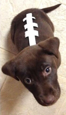 The 25+ best Dog football costume ideas on Pinterest ...