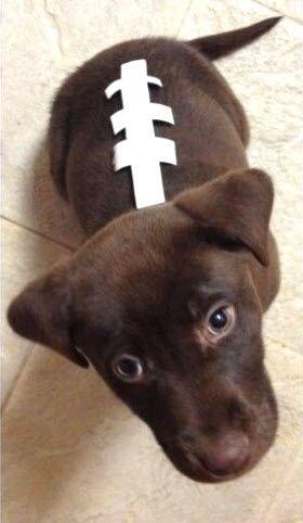 DIY Dog Football Costume - petdiys.com