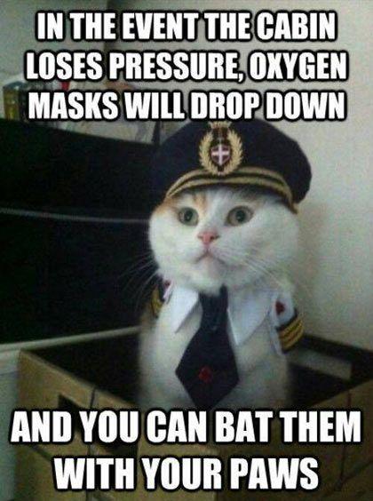 Captain Kitty...