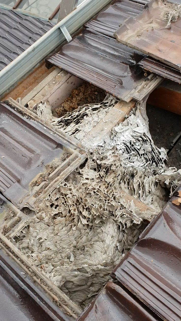 Are you having a WaspNest in your Home? Never attempt to