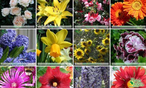 foto di fiori nomi - Cerca con Google
