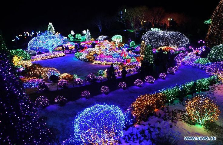The Garden of Morning Calm in Gapyeong, South Korea, is carpeted with festive lights for Christmas and the New Year.