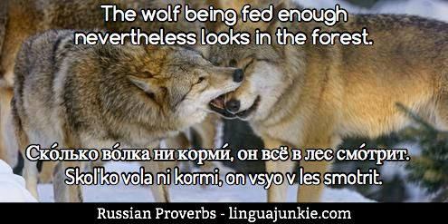 Top 50 Russian Idioms, Proverbs & Sayings. Part 5. | LinguaJunkie.com
