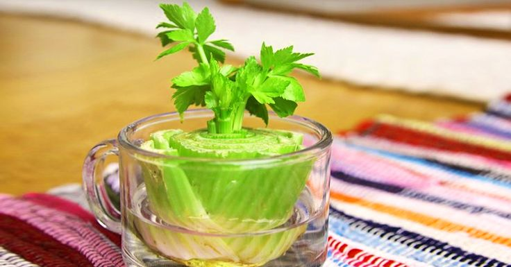 7 Vegetables That You Can Regrow Again. And Again. And Again. And Again.
