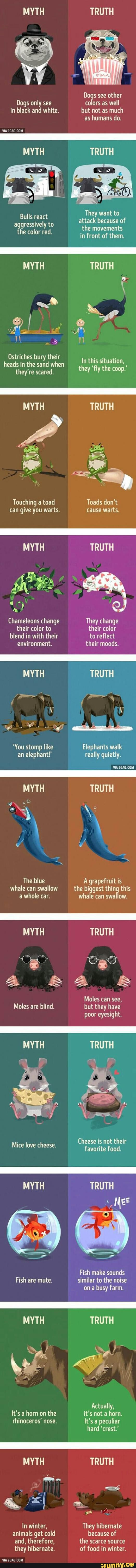 animals, myths, truths