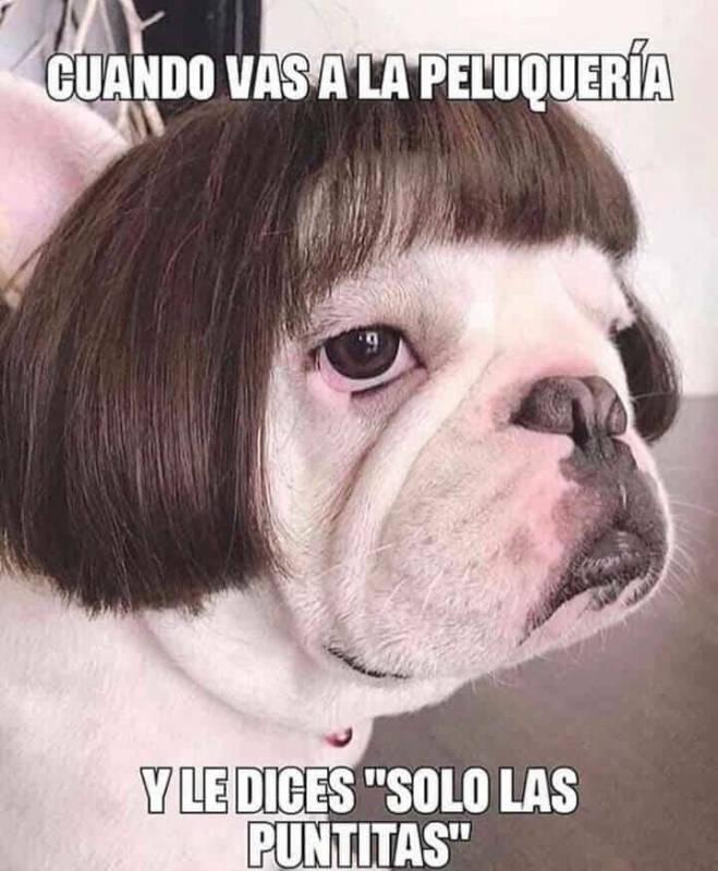 Memesespanol Chistes Humor Memes Risas Videos Argentina Memesespana Colombia Memesmexico Memes Love Viral Bogota French Bulldog Bulldog Dog Skin