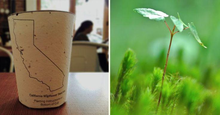 Jede Stunde landen 320.000 Kaffee To-Go Becher im Müll. Damit wir der Umwelt zu Liebe nicht auf einen Kaffee zwischen durch verzichten müssen, haben findige Tüftler den ersten pflanzbaren Kaffeebecher der Welt erfunden. Der Pappbecher ist biologisch abbaubar und enthält Samen lokaler Pflanzen, und kann damit bedenkenlos in den Wald oder auf die Wiese geworfen werden.