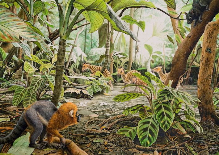 On the forest floor Extinct animals, Prehistoric animals