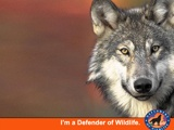 Defenders of wildlife about wolves threats reasons for hope legal