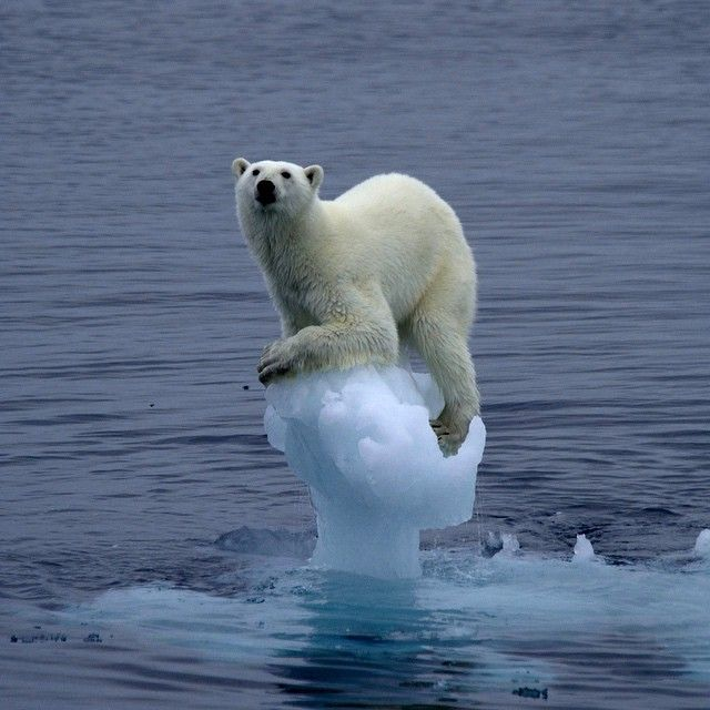An Inconvenient Truth The Crisis of Global Warming