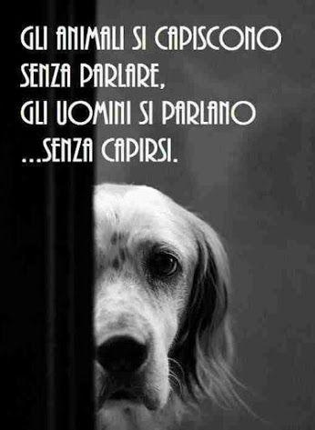 Gli animali si capiscono...