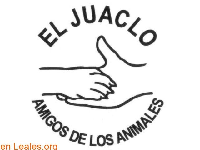 Albergues De Animales España Santa Cruz De Tenerife El Hierro Asociación Protectora De Animales Protectora De Animales Animales