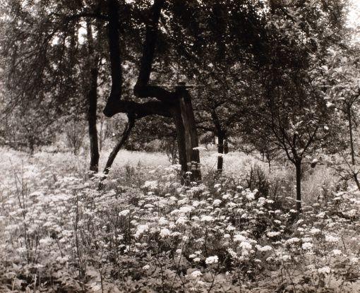 Jan Lauschmann (1901 - 1991) Stromy, 1934