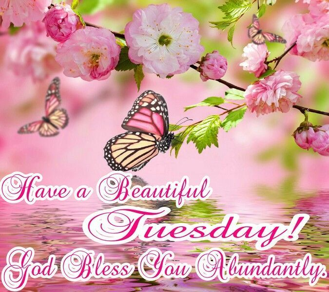 Have a beautiful Tuesday coffee greetings days of the week tuesday tuesday quotes tuesday blessings good morning tuesday tuesday greetings good tuesday