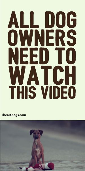 All Dog Owners Need To Watch This Video!