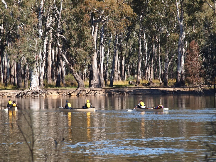 rowing on the murray