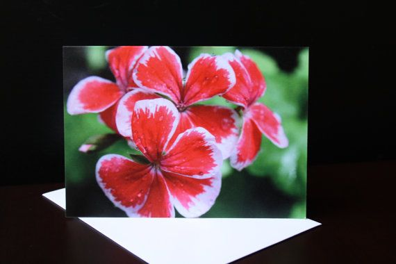 Red and White Flower Greeting Card A6 Blank Notecard by PforPoppy, €2.75