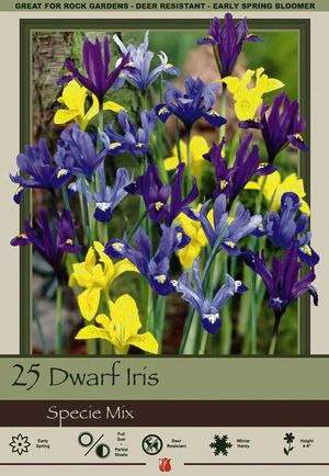 Iris reticulata & danfordiae 'Dwarf Iris Mixture' from Netherland Bulb Company - Dwarf Iris are famous for big flowers on tiny plants. Dwarf Iris are easy to grow in moist, well-drained soil in full sun to partial shade. Dwarf Iris will multiply and return year after year if left undisturbed.