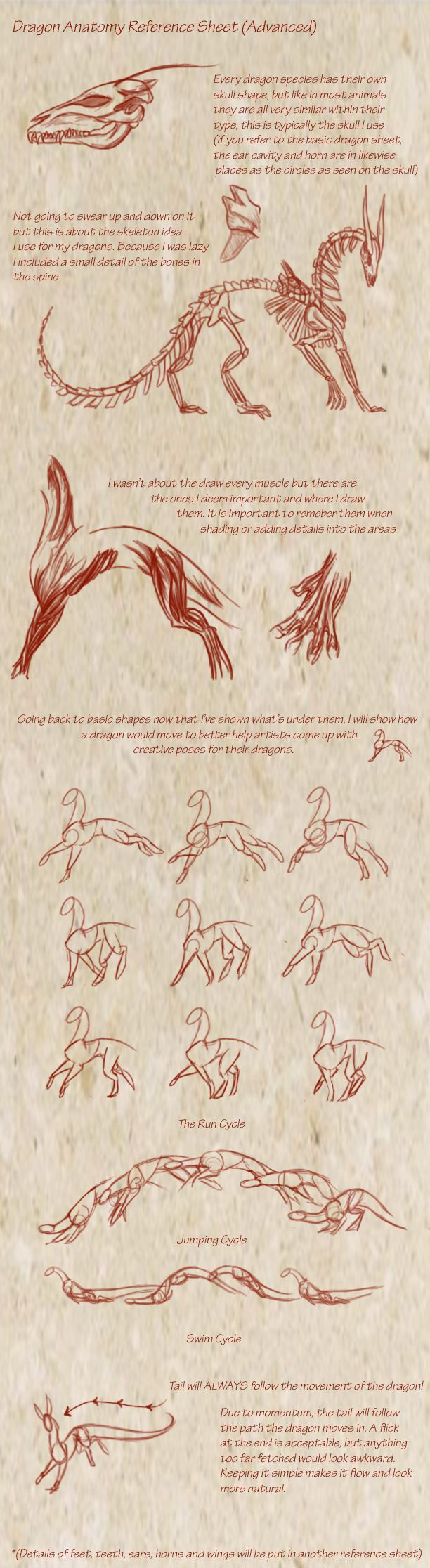 Dragon Anatomy  By *kyriadori On Deviantart More