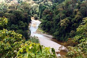 Rainforest Information for Kids