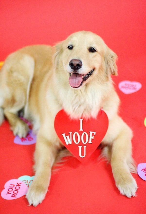 Image Result For Valentines Day Photo Shoots Dog Cutepuppyvalentinesdaypict Image Result For Vale In 2020 Valentines Day Dog Puppy Valentines Dog Photoshoot